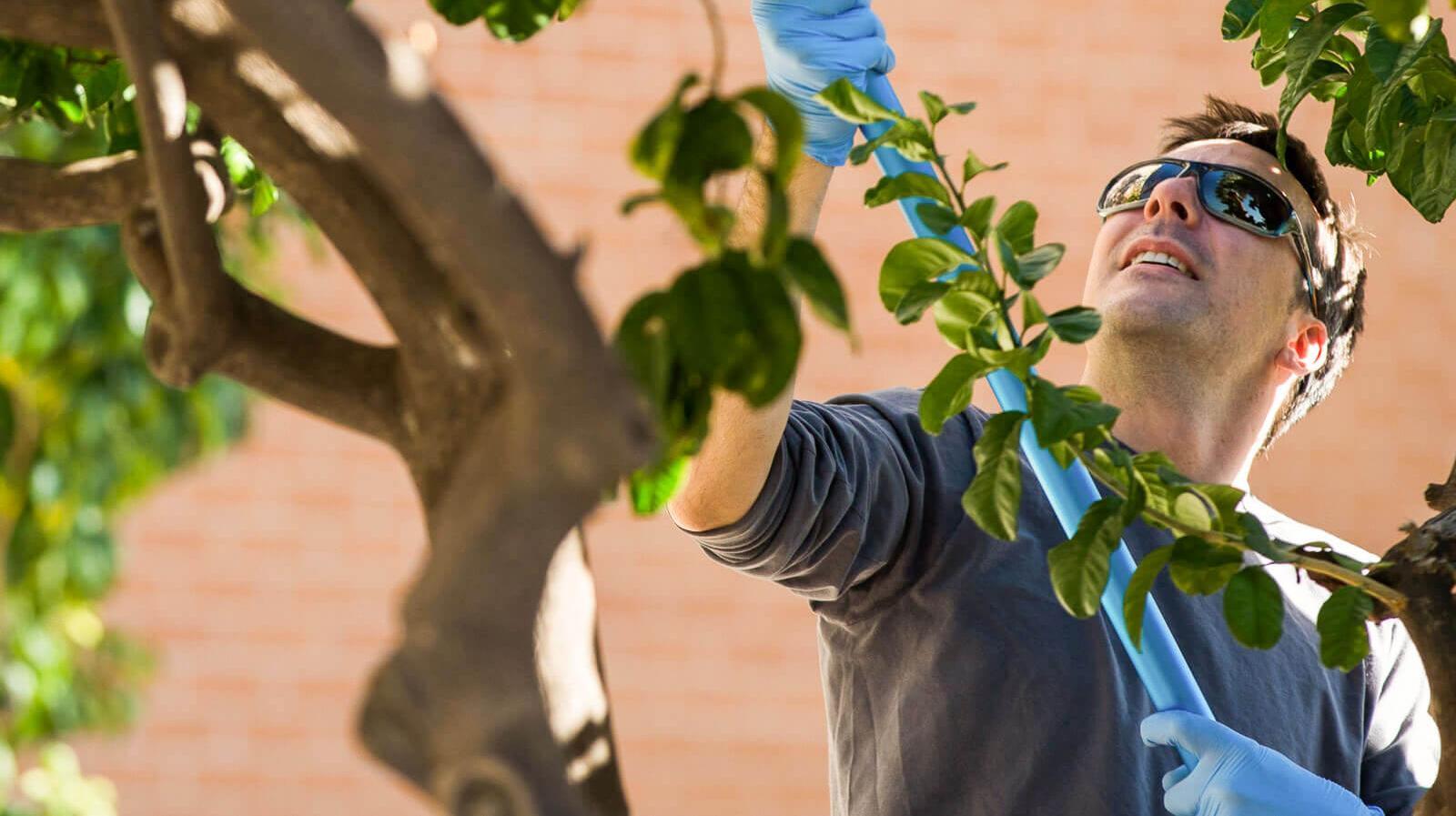 David Fought, graduate student, studies a tree